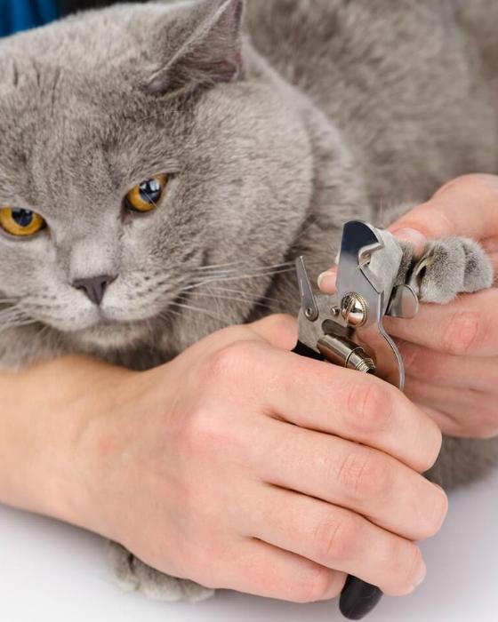 Cat Groomer